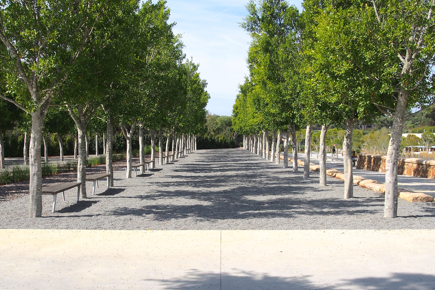 Forest Of Figs, Cranbourne Gardens
