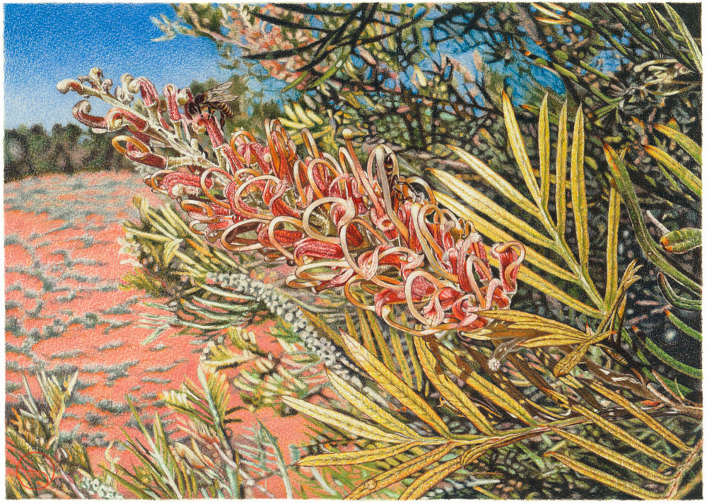 Geoff Sargeant, Grevillea and Bees