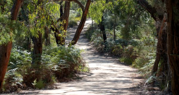 Cranbourne Gardens Bushland. Photo By Amy Akers