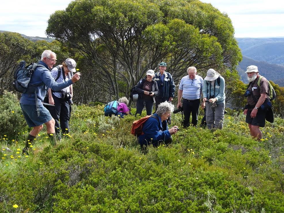Mt Hotham Discovery Tour - by Margaret Margitta