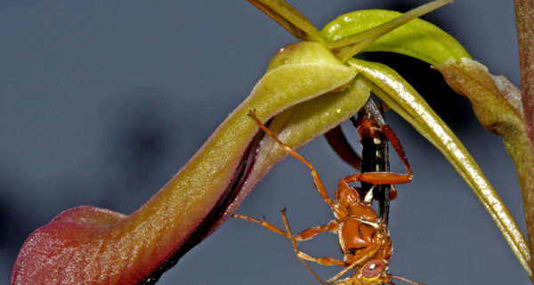'Fascination Of Orchid Pollination' With Mitch Smith