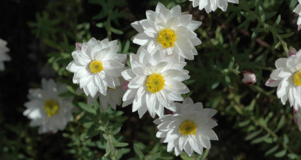 Plant Lists For Spring Plant Sale
