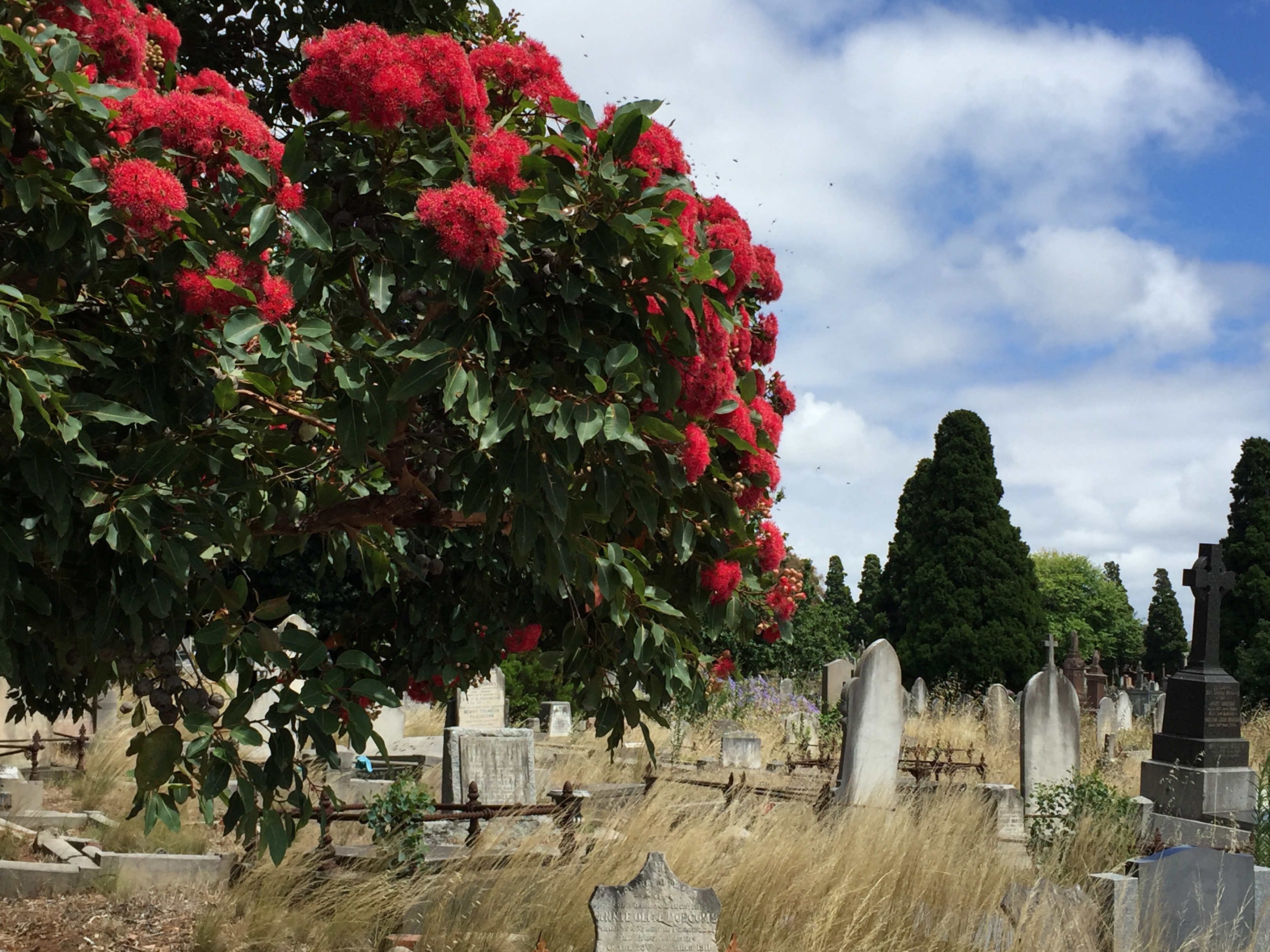 Historic Boroondara Cemetery And Yarra Bend Park