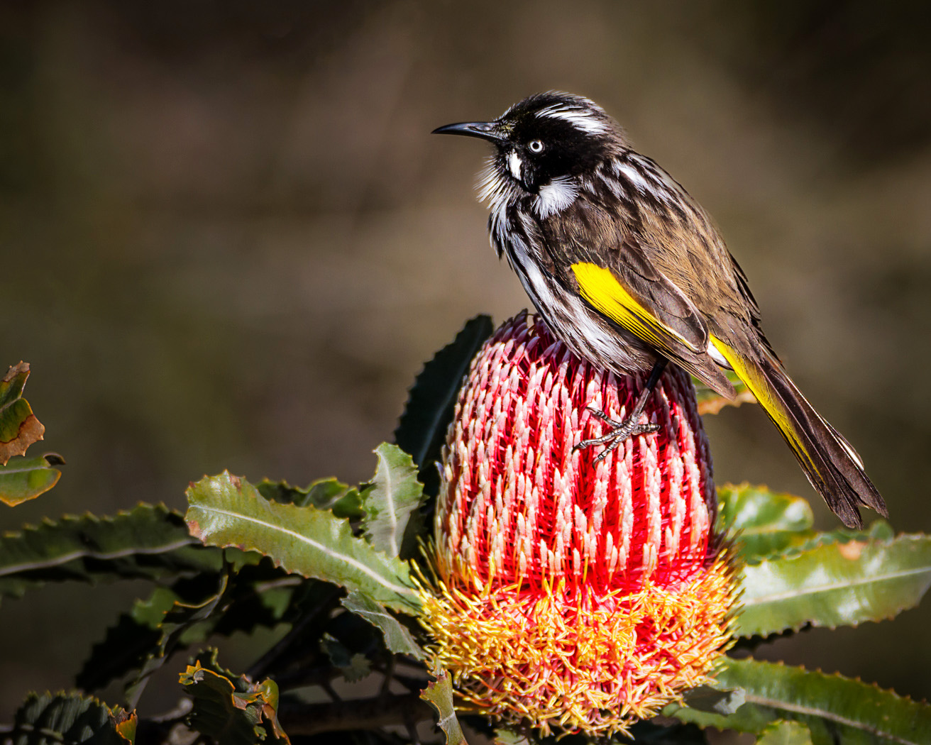 Workshop: Everything About Australian Birds
