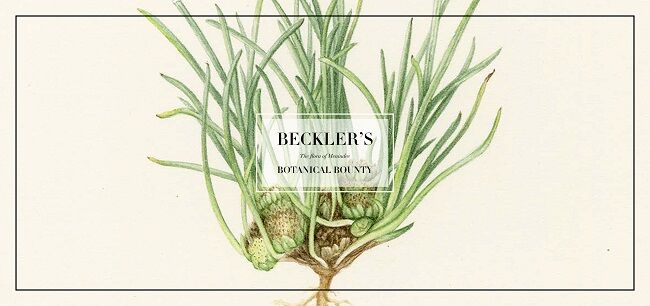 Beckler's Botanical Bounty: The Flora Of Menindie, Until 27 May