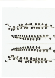 Print of rotundifolia