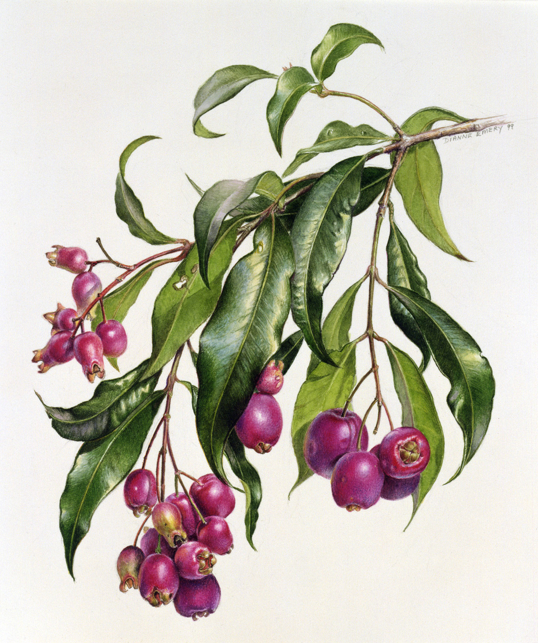 Botanical Art Workshop